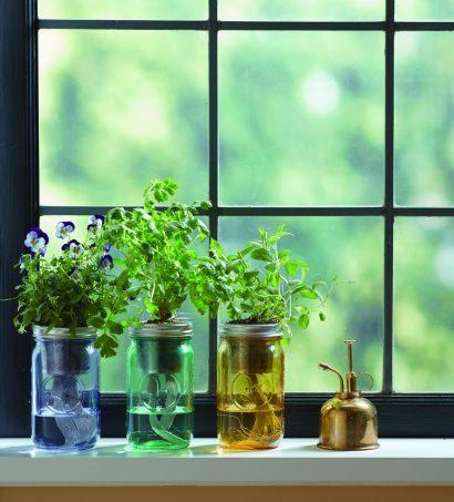 Windowsill Garden Sale