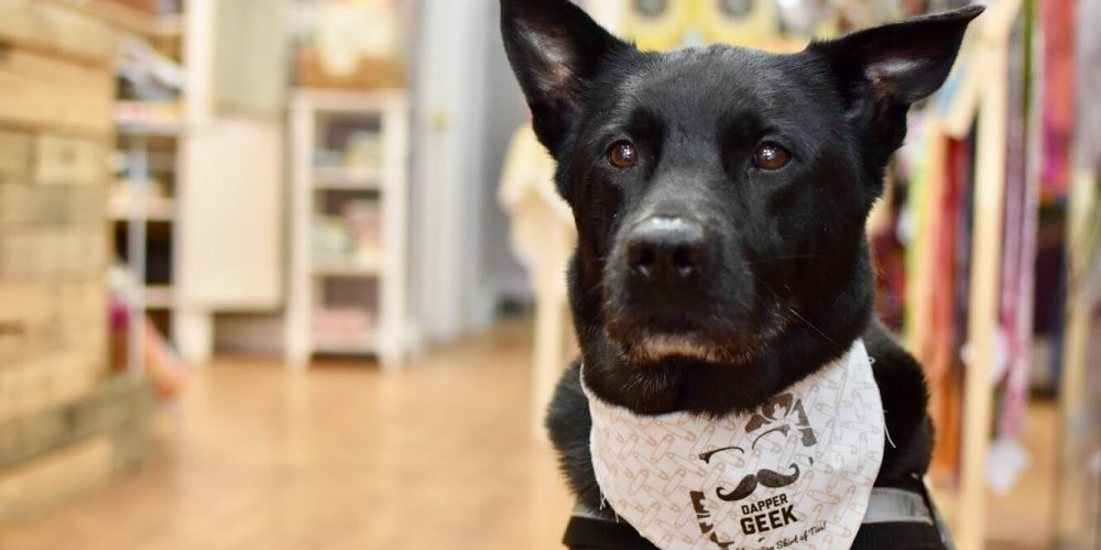 Shop Pets of Downtown Frederick