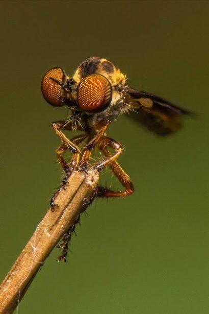 Bug Invitational